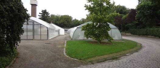 Förderverein Botanischer Garten fragt, Susanne Benary-Höck antwortet