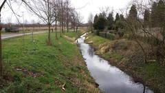 Grüne: Immer Ärger mit den Norfer Gewässern