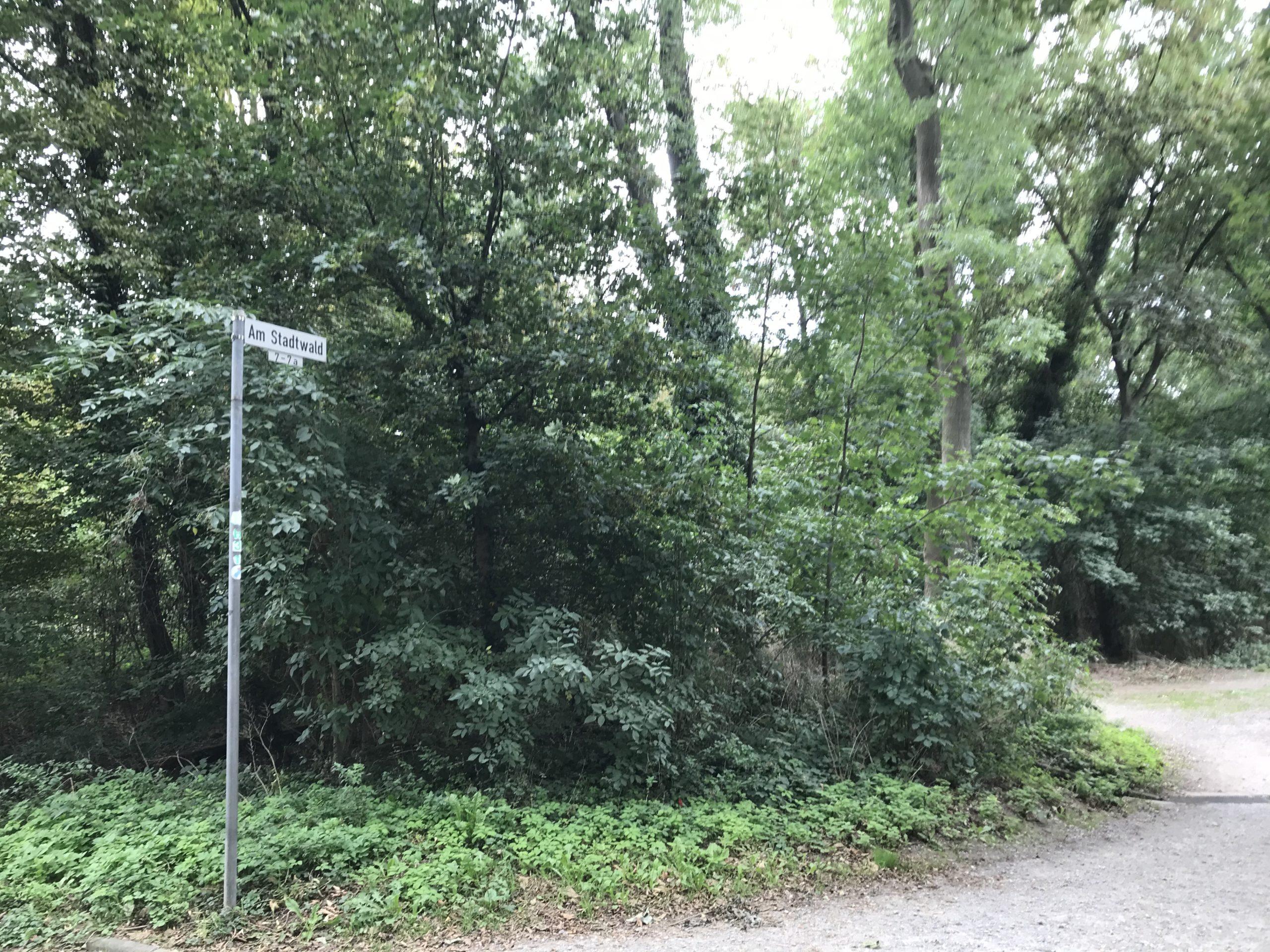 Artenvielfalt im Stadtwald – ein Spaziergang
